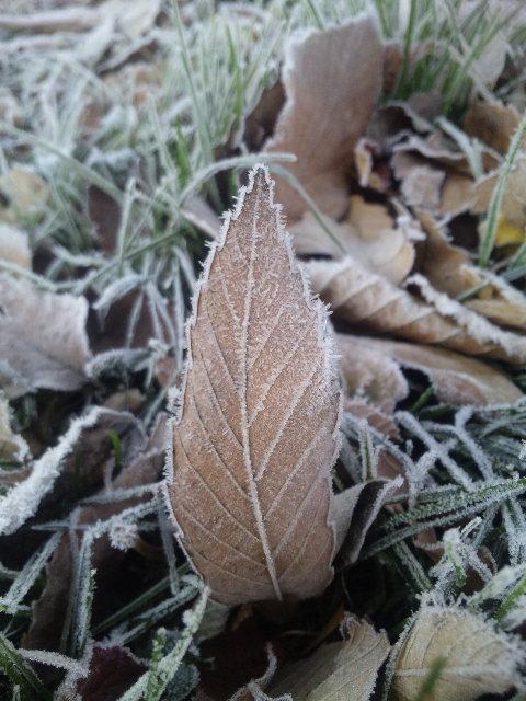 霜が下りてきた。