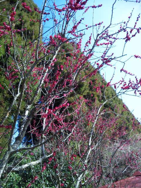 春が来た?