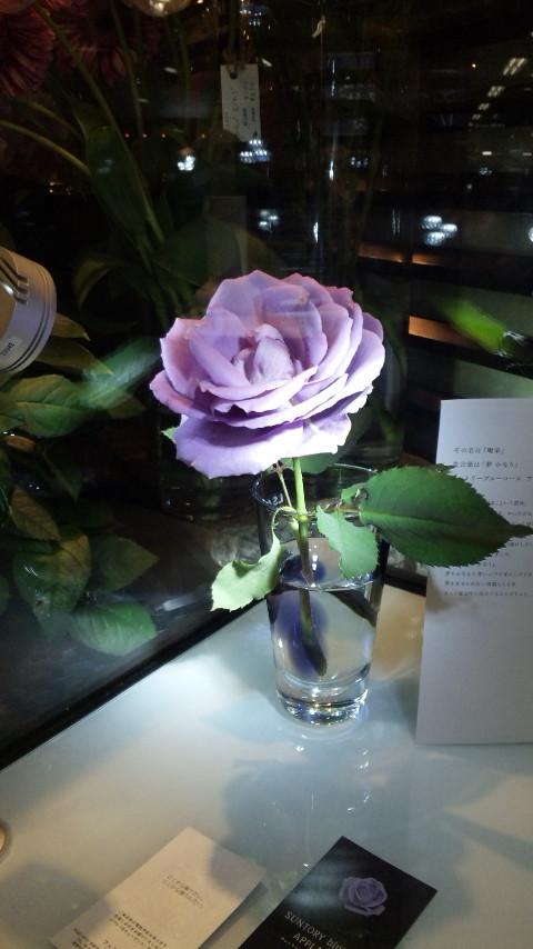 紫の薔薇の人