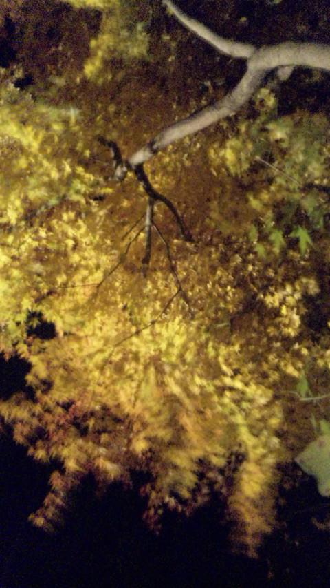 秀月の紅葉