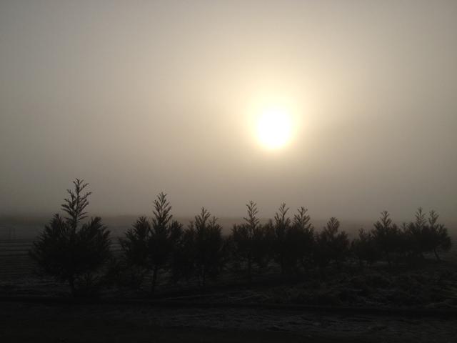 今朝は雲海